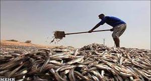 بازگشت ماهی ها به تور صیادان ایرانی